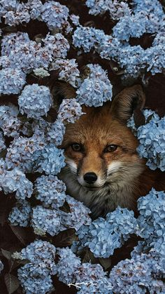 Surreal Animal Photo Manipulations by Karen Cantú Q - Animals Pictures Nature Animals, Animals And Pets, Baby Animals, Cute Animals, Beautiful Creatures, Animals Beautiful, Cute Fox, Tier Fotos, Animal Photography