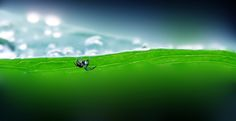 Micro landscape by Remo Fiebig on 500px