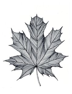 Pin by Maro Waku on Drawing/Painting ideas   Pinterest   Leaves ...
