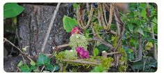 Fairy garden craft ideas, Fairy Gardening author