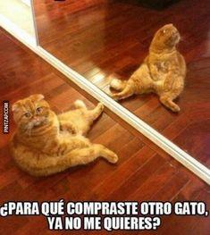 memes de gatos - Buscar con Google