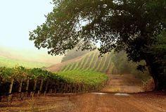 "Garnet Vineyards - Estate-grown ""New World"" Pinot Noir & Chardonnay"