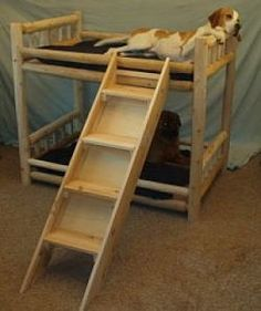 Lol, I would love this for Ice and Precious. I already know Ice would claim bottom and Precious would claim top. Funny Dog Beds, Cool Dog Beds, Cool Pets, Funny Dogs, Dog Bunk Beds, Bunk Beds With Stairs, Yorkies, Sharing Bed, Bunk Bed Designs