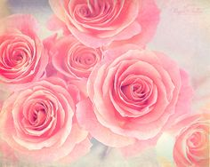 Roses~ Rupa Sutton Photography