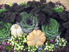 Ornamental cabbage and kale.
