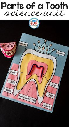 Engage your class in an exciting hands-on experience learning all about teeth! This dental health science unit is perfect for science in Preschool, Pre-K, Kindergarten, First Grade, and Second Grade classrooms and packed full of inviting science activities.