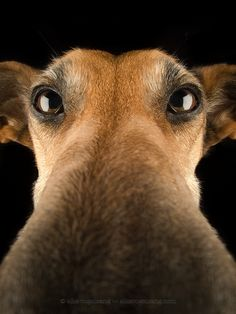 Photograph Nose cam by Elke Vogelsang on Animals And Pets, Funny Animals, Cute Animals, Pet Dogs, Dogs And Puppies, Dog Cat, Doggies, Animal Noses, Dog Nose