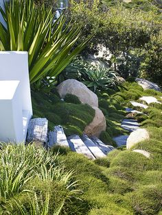 Casuarina love the timber sleepers steps and rounded shrubs down an embankment with contrasting large white rocks. Spiky plant wonderful.
