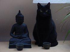 gatto zen