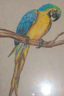 Colored Pencil Bird