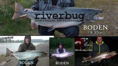 New #riverbug Record fish from Boden. www.riverbug.fi @RiverBugFinland