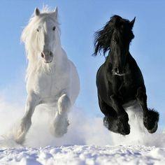 #horses instagram