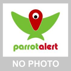 SIGHTING COCKATIEL: 19/07/2016 - Halesowen, Dudley District, West Midlands, England, United Kingdom. Ref#: V25402 - #ParrotAlert #ParrotSighting #BirdSighting #CockatielSighting