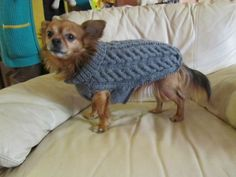 tricot pour chien Bobby - Les créations de Salvina