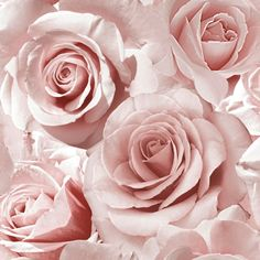 Madison Rose Glitter Floral Wallpaper Raspberry and Blush Pink Muriva 139521