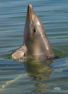 Dolphin jumping out of the water, Monkey Mia | Flickr - Photo Sharing!