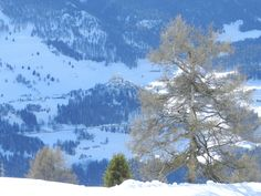 Before the snow storm not every tree and castle was under the white blanked on top of Switzerland in Scuol!