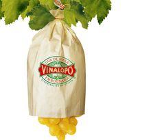 Le raisin de table ensanché du Vinalopó est produit par une méthode originale de culture qui lui confère das caractéristiques physiques et gastronomiques exceptionnelles. C´esr pourquoi il est le seul raisin au monde avec Dénominantion d´Origene.