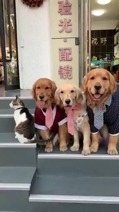 - Relatives photos can be really hard – fascinating baby animals cute , stuff , animals silly , cute animals , animals Cute Little Animals, Cute Funny Animals, Funny Cute, Cute Cats, Cute Animal Videos, Funny Animal Pictures, Cute Videos, Funny Dog Videos, Funny Dogs