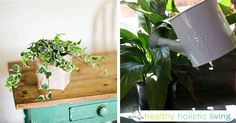 At Healthy Holistic Living we search the web for great health content to share with you. This article is shared with permission from our friends at RealFarmacy.com Everyone knows that growing plants inside your home can bring beauty, vitality, and life into any living space. Did you know that growing...More