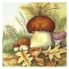 грибы живопись - Поиск в Google