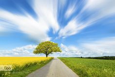 a tree by the road by mic2012 #landscape #travel