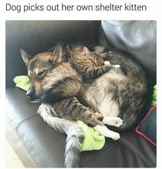 24 Best Animal Memes of the Week - katzen/cats - Animals Pictures Funny Animal Memes, Cute Funny Animals, Funny Animal Pictures, Cute Baby Animals, Funny Cute, Animals And Pets, Cute Cats, Funny Memes, Funny Pics