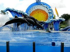 Top 10 tourist attractions in Florida. Explore sightseeing, travel destinations & fun things to do in Florida at famous attractions like Walt Disney World, Universal Studios Orlando, South Beach.