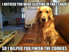 I noticed you were asleep in that chair, so I helped you finish those cookies.