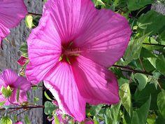 Dordogneflower