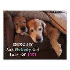 Golden Retriever Exercise Demotivational Poster by #AugieDoggyStore. Ain't Nobody Got Time For That!