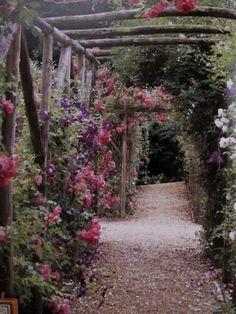 love the canopy walkway
