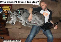 lap dog?