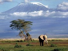 """Our NEWEST itineraries: Authentic Kenya Safaris!""  http://www.experienceittours.com/kenya-safari-itineraries/"