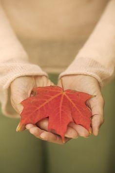 Preserving beautiful Fall Colored Leaves tutorial