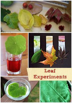 Science experiments usings leaves -- great DIY Fall STEM for kids!