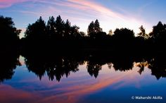 Reflections on Water at UC Davis Arboretum