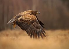 Photo White Tailed Eagle by Phil  Morgan on 500px