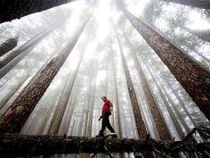 Olympic National Park, Washington / Michael Hanson