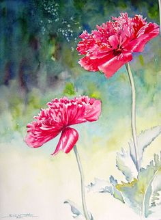 wfTwo Red Poppies.jpg (474×648)  by Sue Lynn Cotton