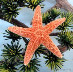 Beach Wedding Boutonniere Sugar star fish by CarmelasCoastalCraft