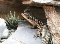 Product Review: Custom Reptile Habitats Alice Springs 4' Reptile Decor Kit