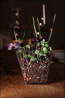 """Serve in small glass containers so you can see the texture of the """"soil."""" Another edible soil recipe - looks tastier and just with simple sprigs of herbs. perhaps with a trowel to serve? Then topped with the mains..."""