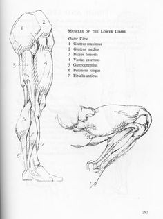 Complete Anatomy and Figure Drawing Book Elegant 83 Best Figure Drawing Images In 2019 Leg Anatomy, Anatomy Poses, Anatomy Study, Anatomy Reference, Human Drawing, Body Drawing, Drawing Stuff, Anatomy Sketches, Anatomy Drawing