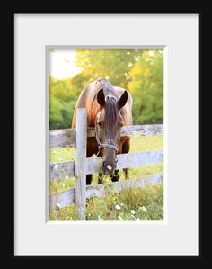 $45 Gentle Horse 11x14 Fine Art Print, nature, animal, equine photography