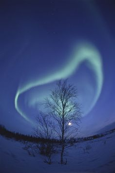 Spiral Aurora and Winter Tree, Yellowknife, Northwest Territories, Canada by Nori Sakamoto.