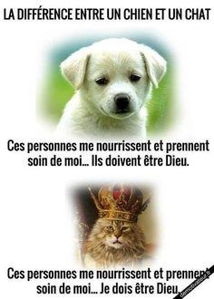 Façon de penser absolument différente entre un chien et un chat.