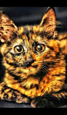 Sunstrike was a warrior from lighting clan, a few moons after his warrior ceremony he ran away with his his true love a kittypet named jasmine. Sunstrike a black cat with a majority of orange was then adopted by jasmines house folk. He was renamed sunny. A year later his housefolk abandoned him and jasmine and they moved away. Jasmine died by greencough. Sunstrike went back to lightning clan but they drove him out. Now sunstrike is an elderly loner who lives along the lighting clan boarder…