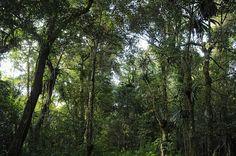 Montagne d'Ambre rainforest Amber Mountain National Park, Madagascar