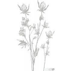 Compo Florus